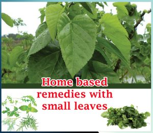 Home based remedies with small leaves