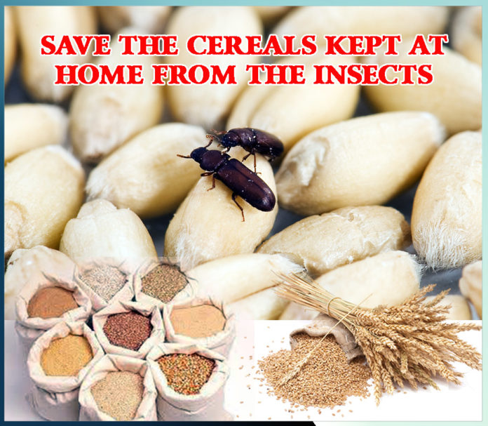 save cereals from insects - sachi shiksha