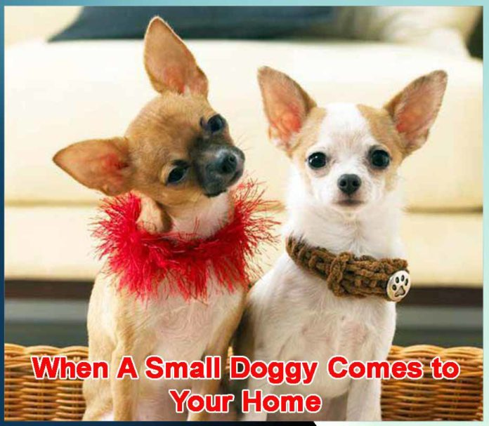 When A Small Doggy Comes to Your Home