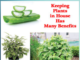 Keeping Plants in House Has Many Benefits