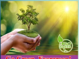 Go Green and Recycle Your Evergreen - Sachi Shiksha